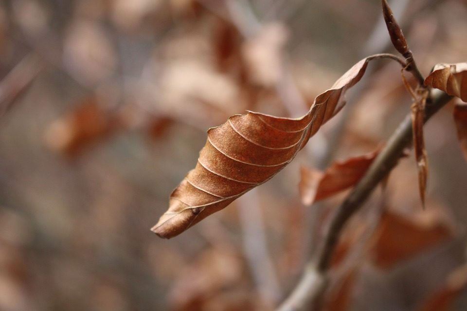 Free photo Autumn Golden Autumn Leaves Brown Dry Leaf Nature