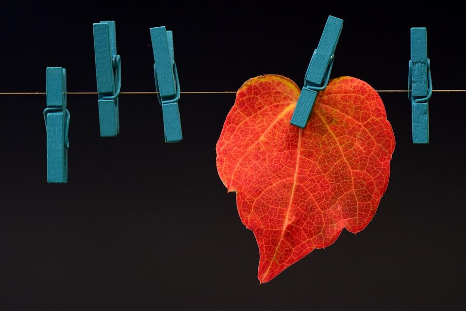 Leaf, Autumn, Fall Foliage, Leaves, Golden Autumn