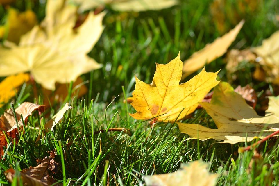 Grass, Leaves, Autumn