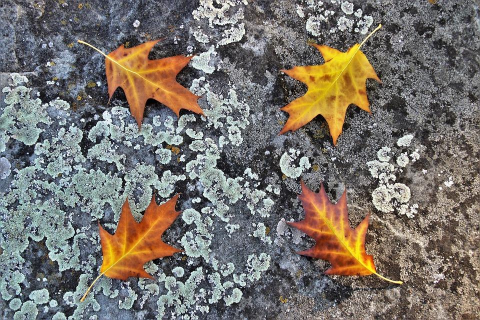 Foliage, Stone, Rotten, Gray, Autumn, Collapse