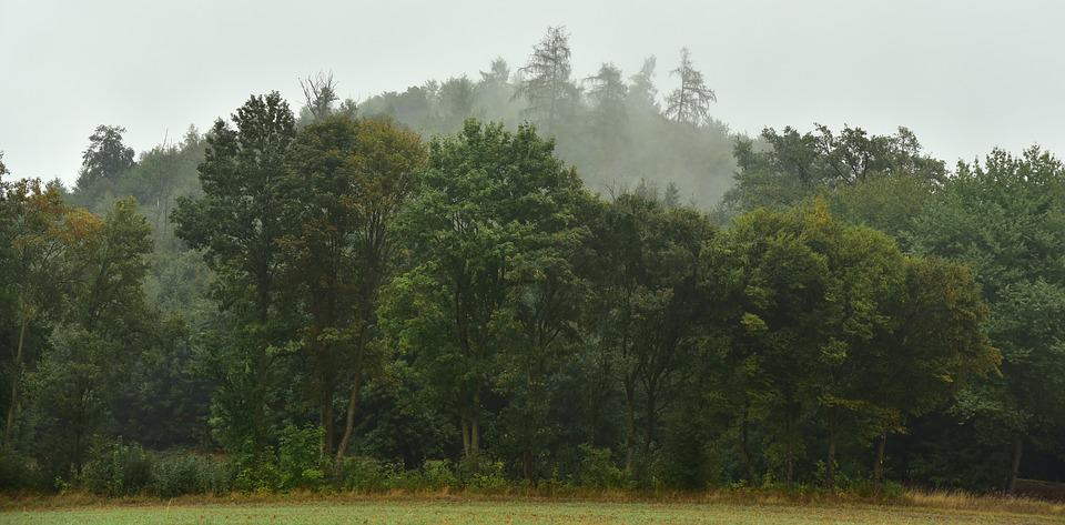 Forest, Haze, Fog, Landscape, Autumn, Trees, Green