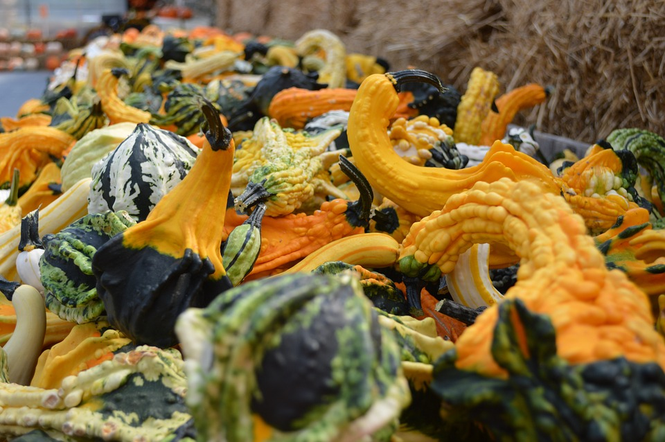 Gourds, Fall, Autumn, Decoration, Halloween, Harvest