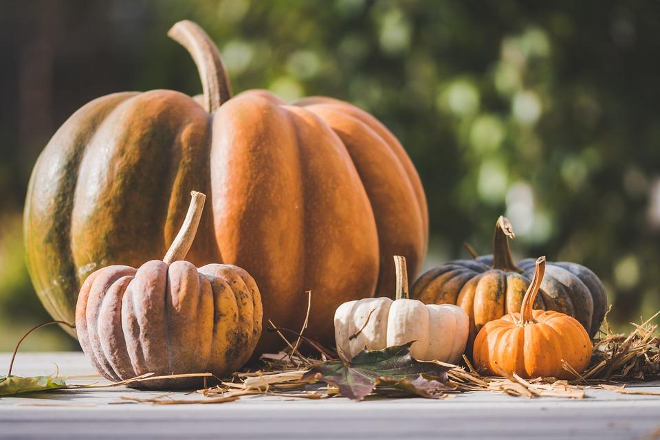 Pumpkin, Pumpkins, Autumn, Decoration, Halloween, Food