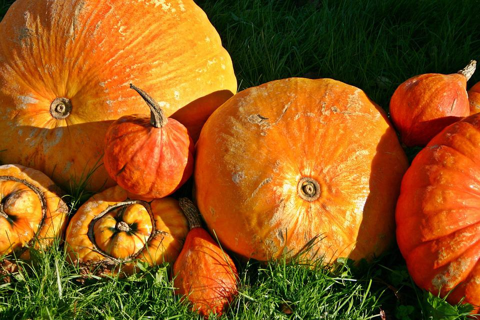 Pumpkin, Orange, Autumn, Harvest Festival, Halloween