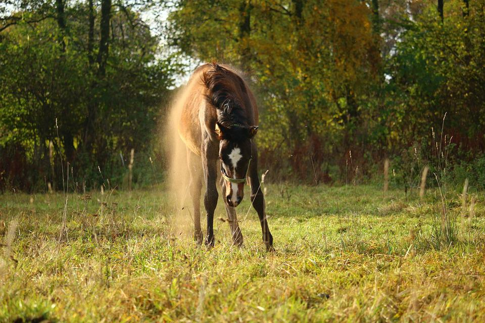 Horse, Foal, Dust, Pasture, Autumn, Rolling, Brown