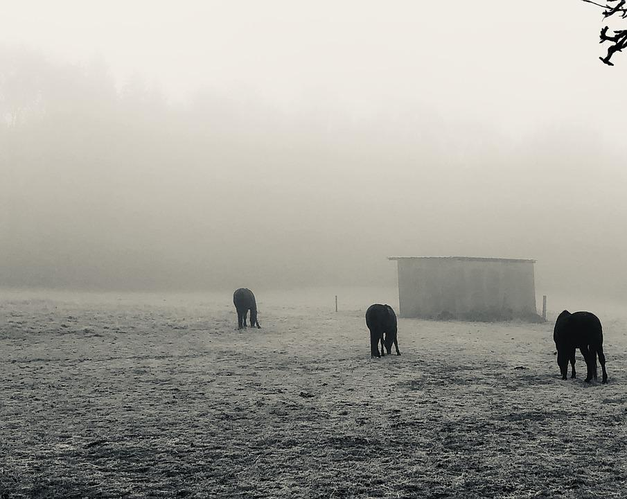 Fog, Horses, Autumn, Mystical