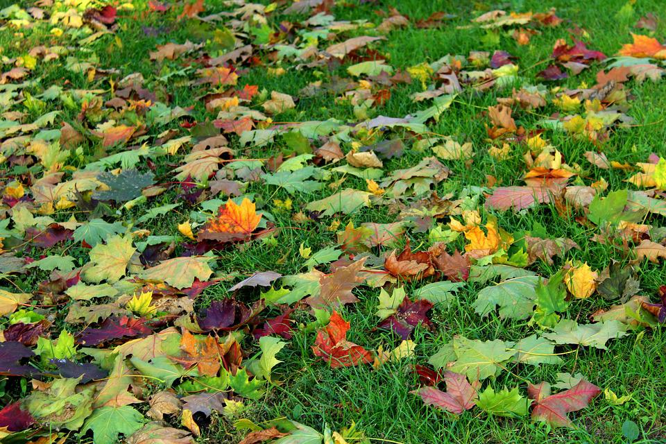 Colorful Leaves, Autumn, Collapse, Season, In The Fall