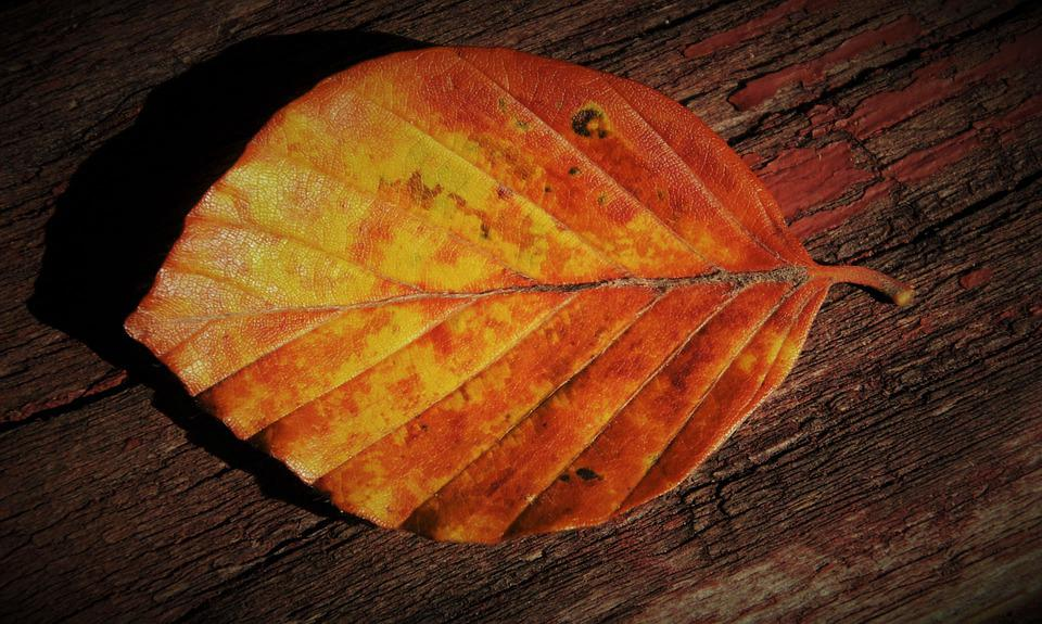 Yellow, Light, Autumn, Collapse, In The Fall