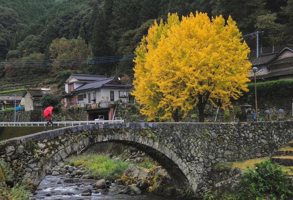 Gingko Tree, Ishibashi, Countryside, Wood, Autumn