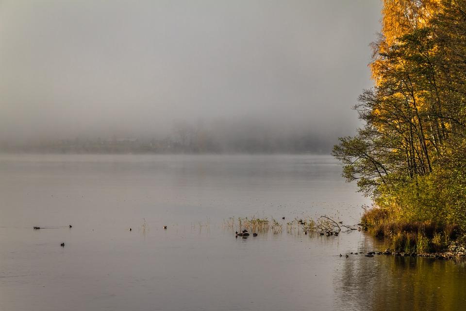 Fog, Nature, Utu, Autumn, Lake, Autumn Colors