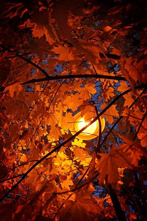 Autumn, Leaves, Autumn Leaves, Wood, Light, Lamplight