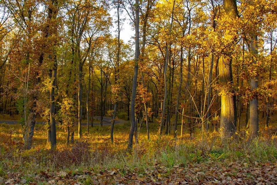 Forest, Autumn, Light, Nature, Landscape, Wood, Color