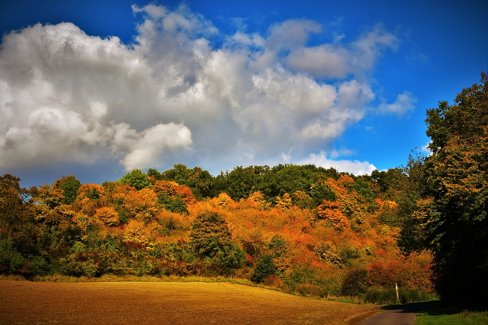 Autumn Landscape, Fall Colors