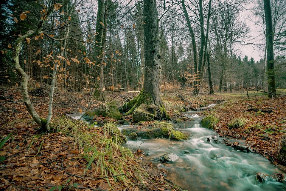 Nature, Tree, Landscape, Forest, Bach, Autumn