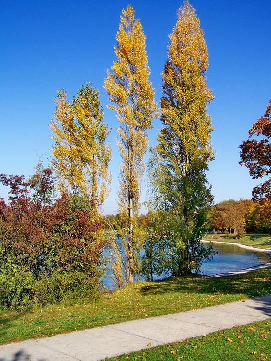 Autumn Landscape, Discoloration, Nature