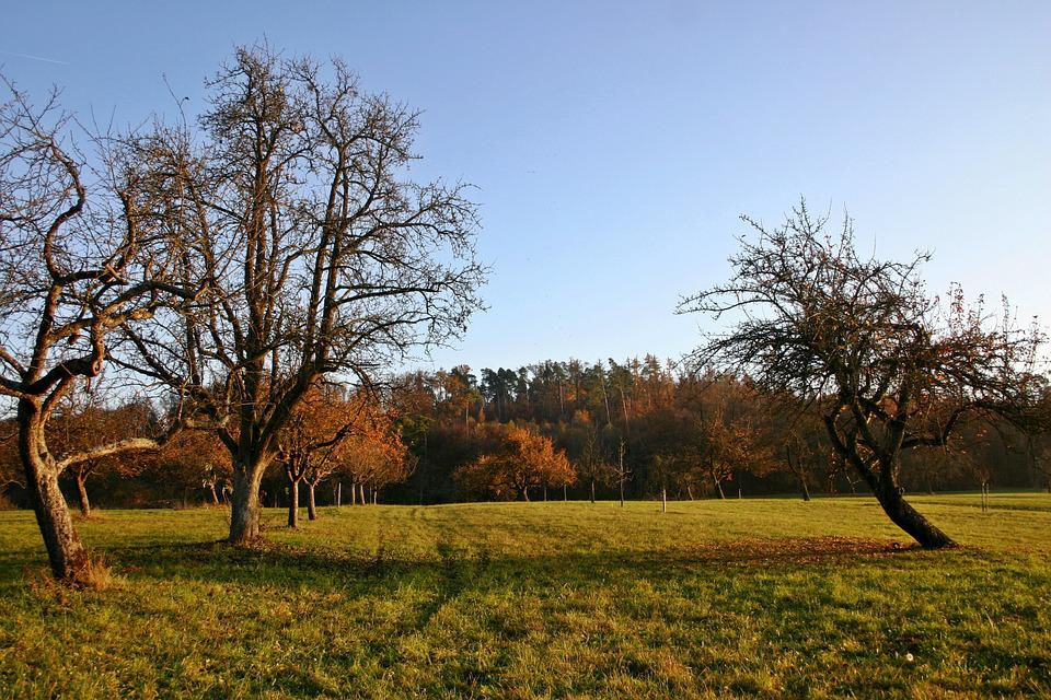 Orchard, Autumn, Nature, Landscape, Germany