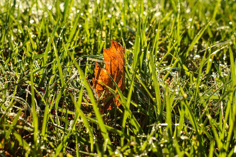 Fall, Nature, Grass, Autumn, Landscape, Haze, Trees