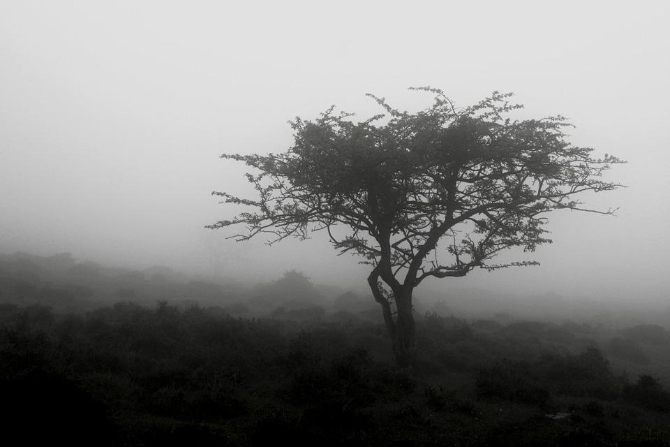 Tree, B W, Landscape, Autumn