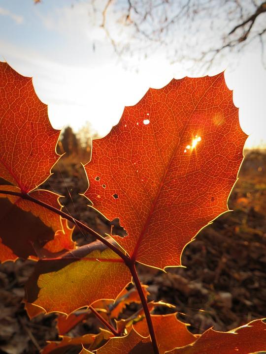 Leaf, Foliage Leaf, Leaves, Autumn, Autumn Leaf
