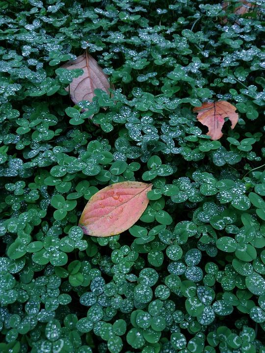 Autumn, Leaf, Cool