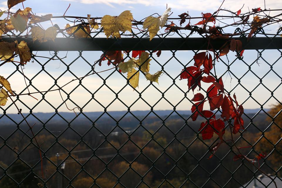 Fence, Leaves, Autumn, Fall, Leaf