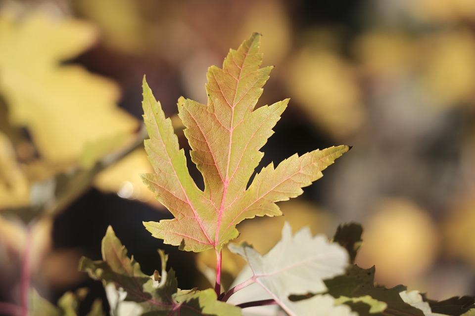 Leaf, Autumn Leaf, Fall Color, Fall Leaves, Autumn Mood