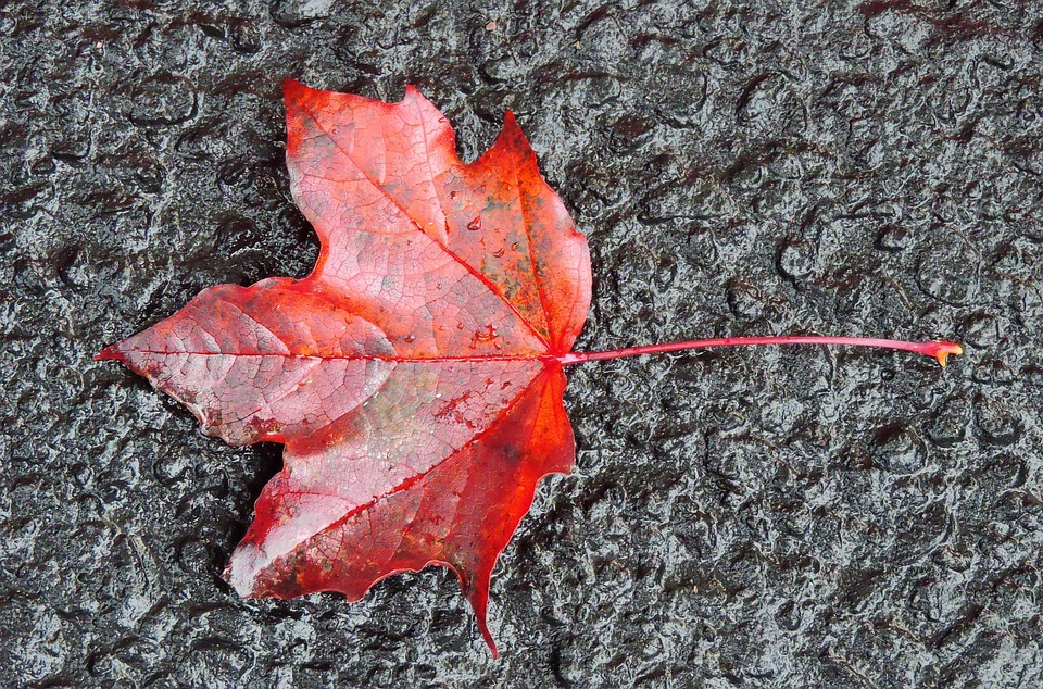 Fall, Leaf, Autumn, Red, Leaves, Ground