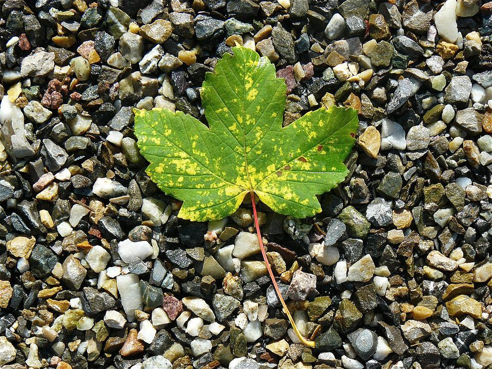 Maple Leaf, Maple, Nature, Stones, Leaves, Autumn Leaf
