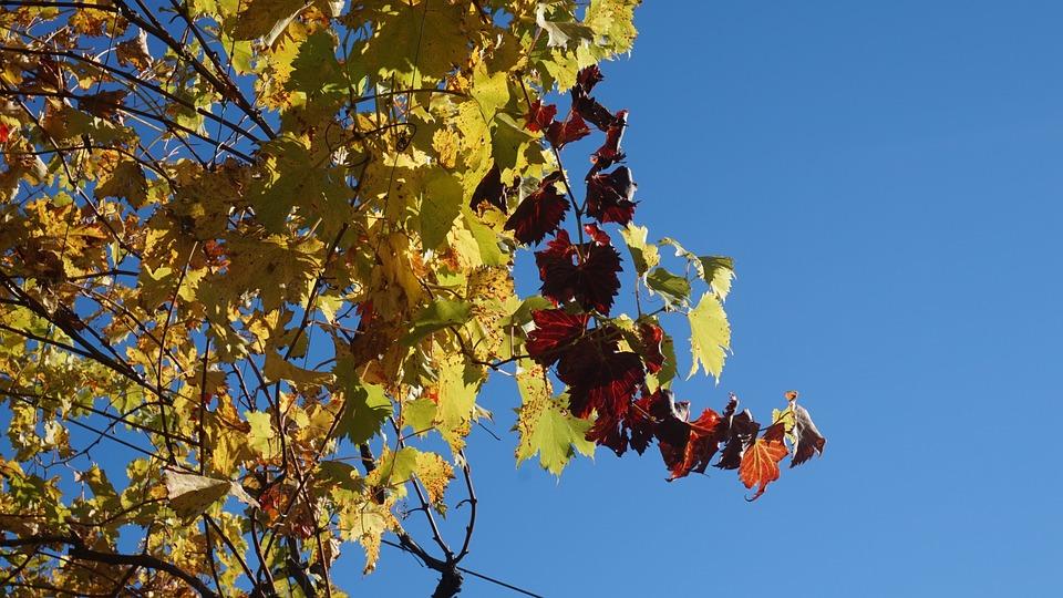 Leaf, Tree, Autumn, Season, Nature