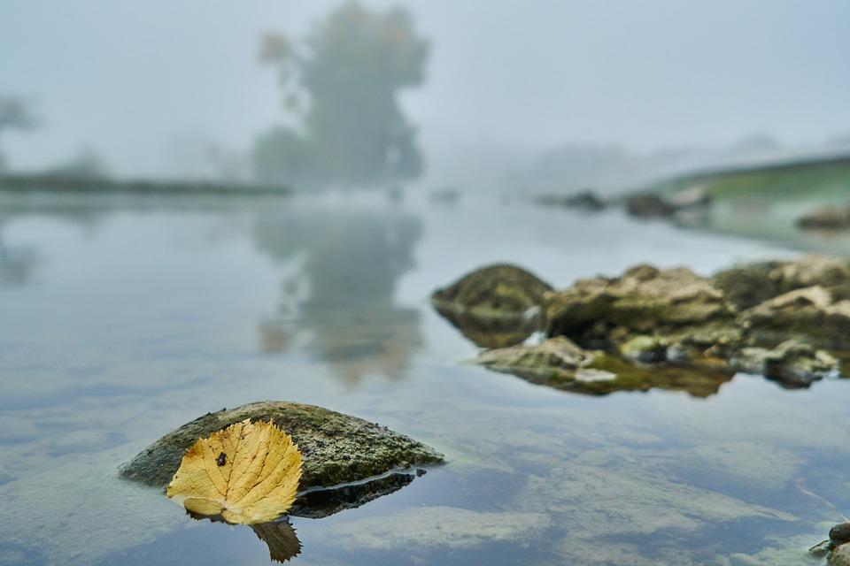 River, Autumn Leaf, Fog