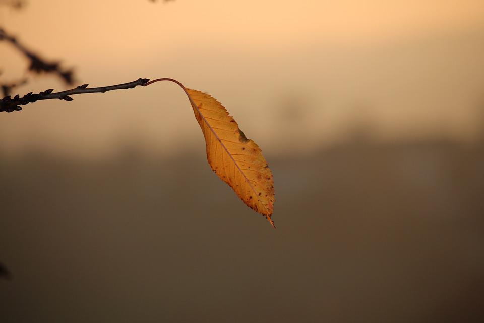 Autumn Leaf, Single, Branch