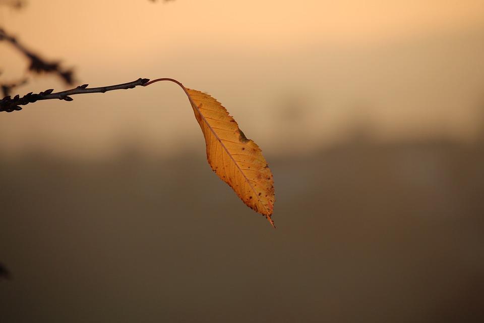 Autumn Leaf, Single, Branch