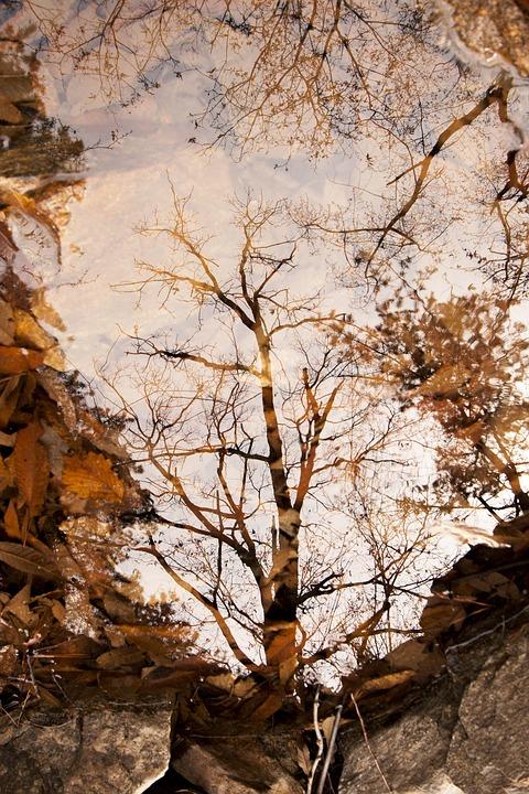 Autumn, Autumn Leaves, Pond, Lake, The Leaves