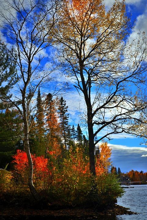 Autumn Landscape, Fall, Colors, Nature, Autumn Leaves