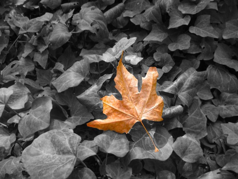 Autumn, Leaf, Fall, Nature, Season, Autumn Leaves