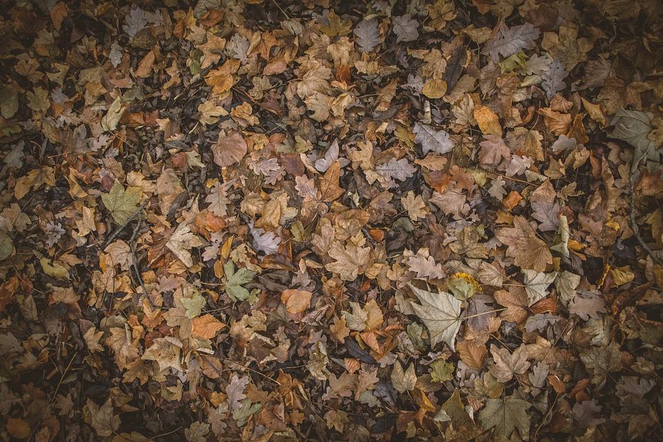 Autumn Colours, Autumn Leaves, Autumnal, Brown, Texture