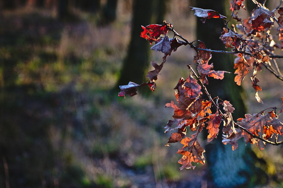 Autumn, Leaves, Colors, Background, Nature, Sheet, Red