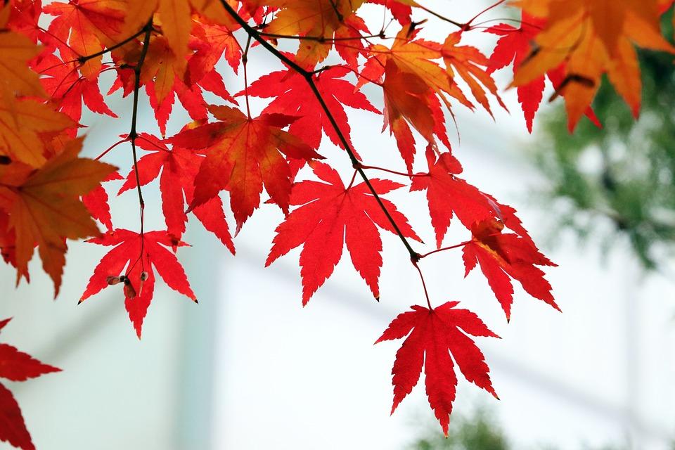 Autumn, Autumn Leaves, Colorful, Nature, Wood, Leaf