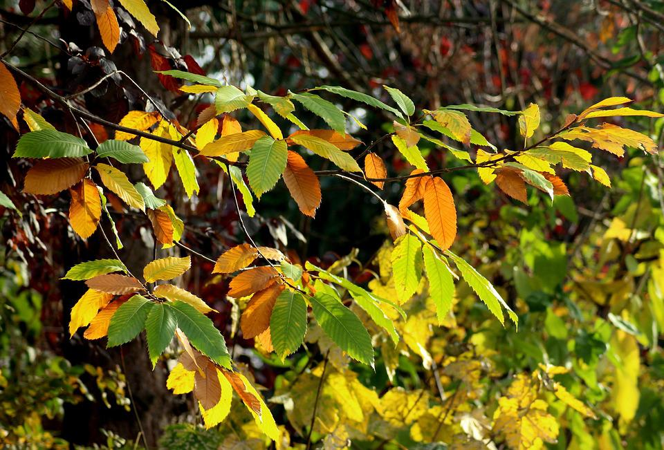 Autumn Leaves, Colors Of Autumn, In The Fall, Mood