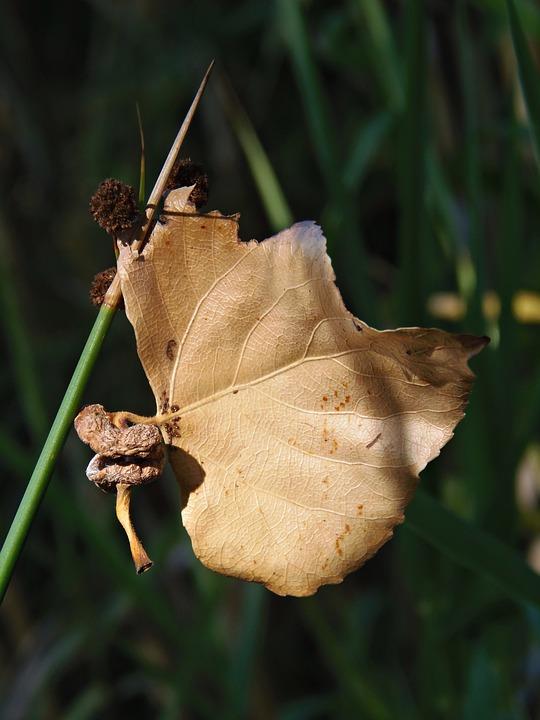 Leaf, Dry Leaf, Autumn, Float, Autumn Leaves