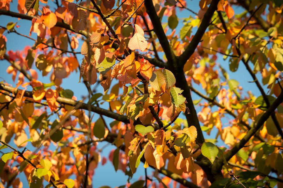 Autumn, Leaves, Fall Foliage, Forest, Fall Color