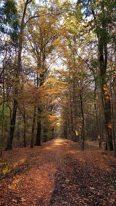 Autumn, Forest, Leaves