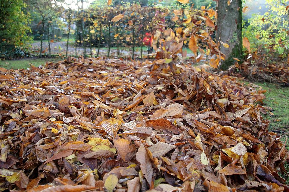 Autumn, Leaves, Gardening, Chestnut Leaves, Seasons