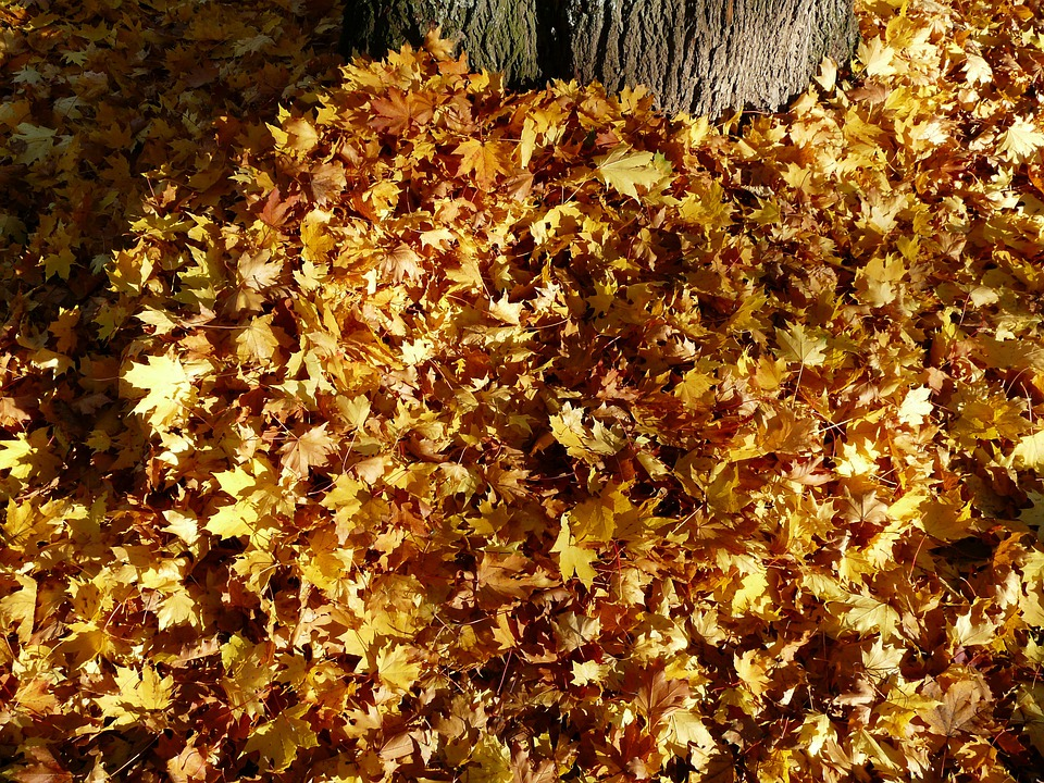 Leaves, Leaf Piles, Autumn, Fall Foliage, Autumn Forest