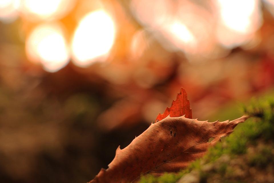 Autumn, Memory, Leaves, Autumn Leaves, The Leaves, Leaf
