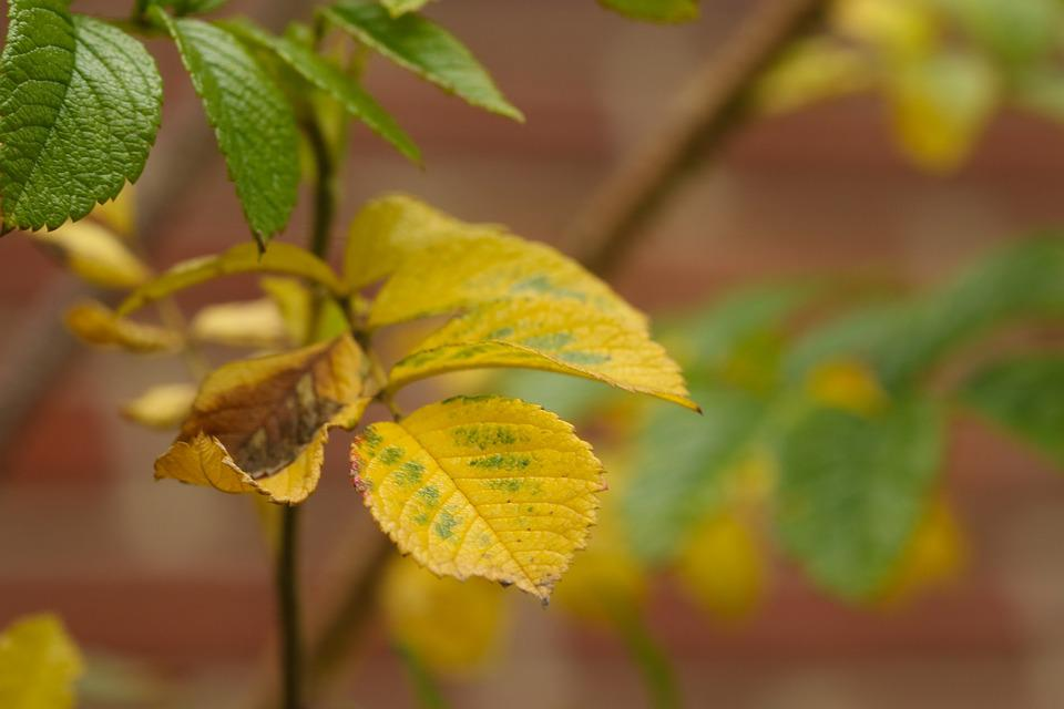 Yellow, Leaf, Autumn Leaves, Plant, Fall