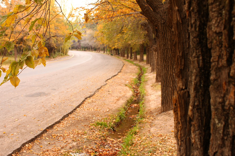 Path, Tree, Leaf, Autumn, Dry Leaf, Leaves, Dry, Yellow