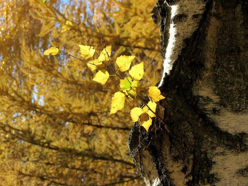 Autumn, Leaves, Autumn Leaves, Fall Colors