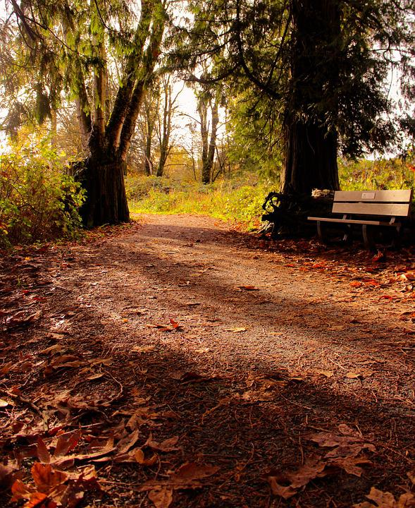 Autumn, Leaves, Sunset, Fall, Nature, Autumn Leaves