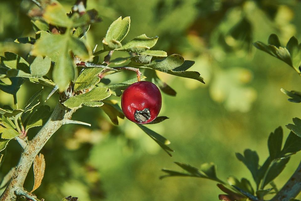 Leaves, Shrubs, Plant, Green, Flowering, Nature, Autumn
